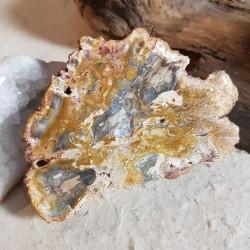 Tranche BOIS Fossilisé